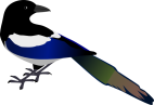 magpie-clipart-cartoon-1